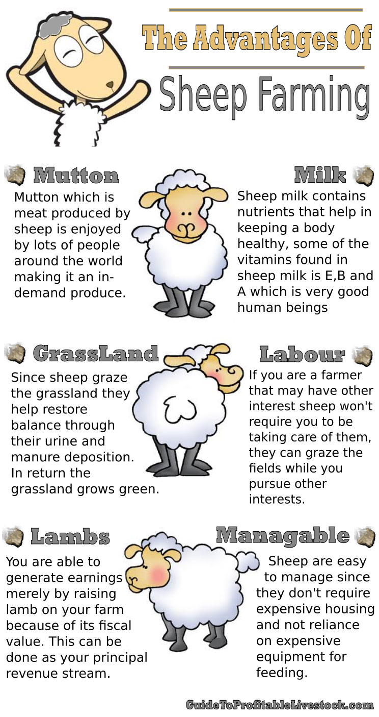 The Advantages Of Sheep Farming