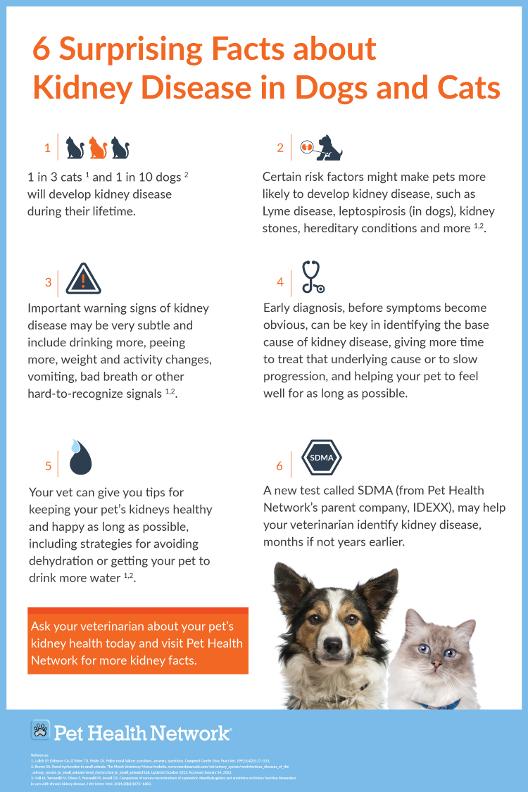 6 Surprising Facts About Kidney Disease In Dogs And Cats