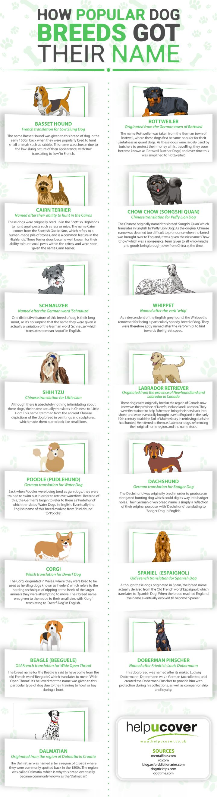 How Popular Dog Breeds Got Their Name